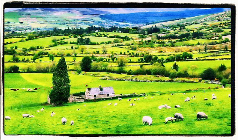 Ireland quotations