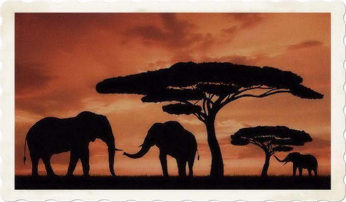 Aphorisms on Africa