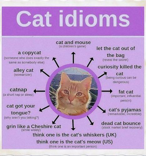 English language idioms