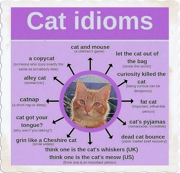 English Cats Idioms